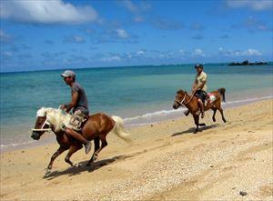 島の馬走る!!_R