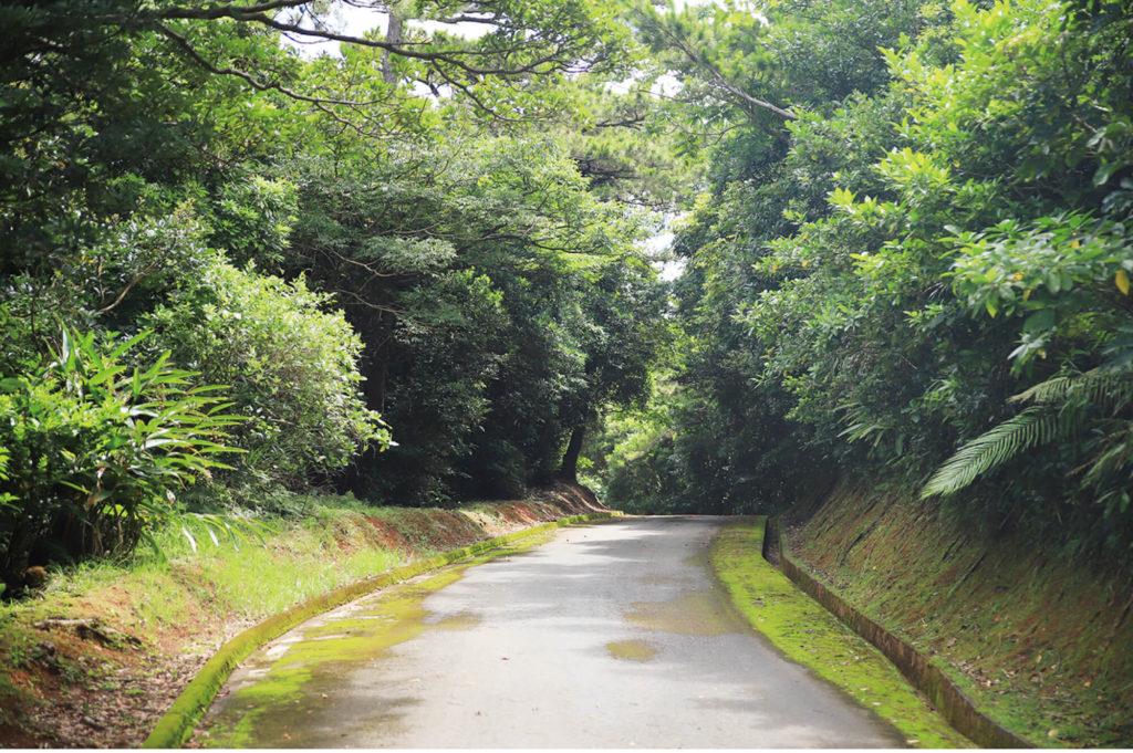 穴場ルートの「黒石森林道」