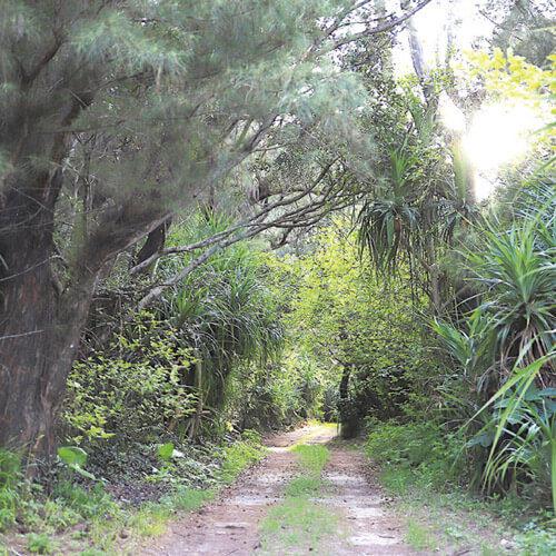 何か雰囲気のある林道