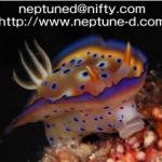 Neptune Divers (ネプチューン・ダイバーズ)