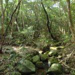 ラムサール条約登録地 久米島の渓流・湿地