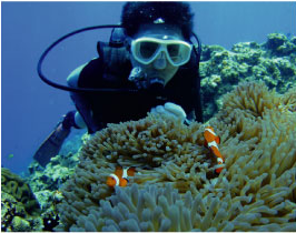 久米島潜水