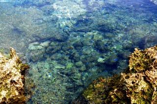 熱帯魚の家